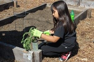 Gardening Workshop-300  081118