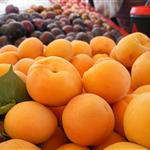 closeup apricots-San Pablo 2012 June 23
